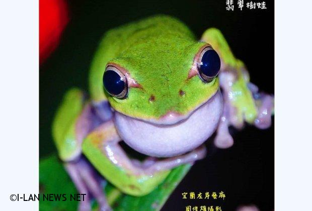 樹蛙聽經聞道皈依!