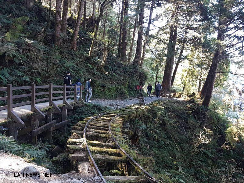 2020春節太平山攻略 連假走春看這裡!