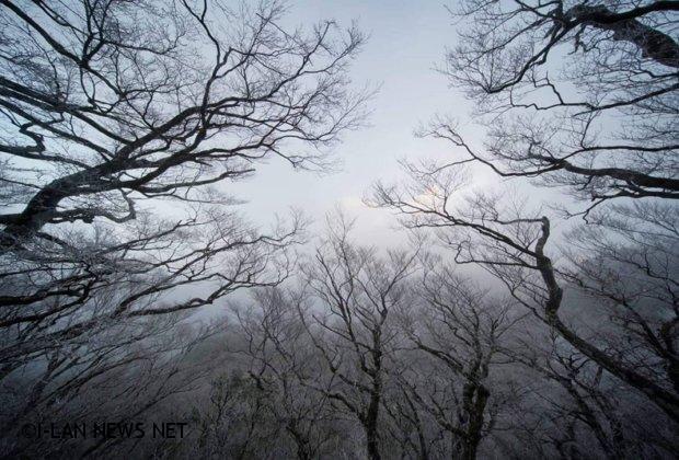 太平山深夜創下入冬以來最低溫零下6度但未下雪!