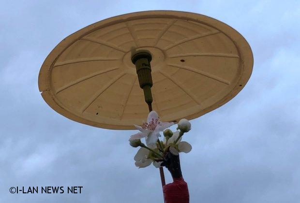 一隻小雨傘卻是三星上將梨的保護傘