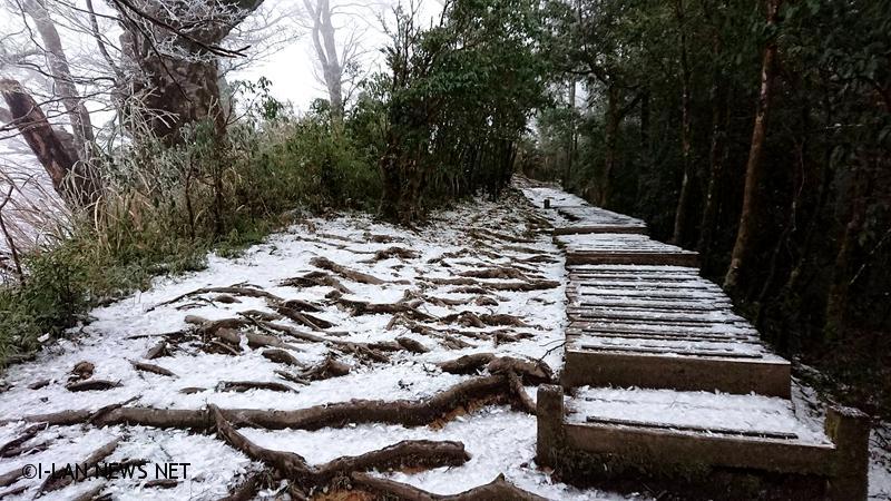 太平山國家森林遊樂區山區霧淞迷漫樹梢掛滿白霜