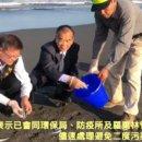 五結清水海邊白口魚群集體暴斃 死因有待解謎