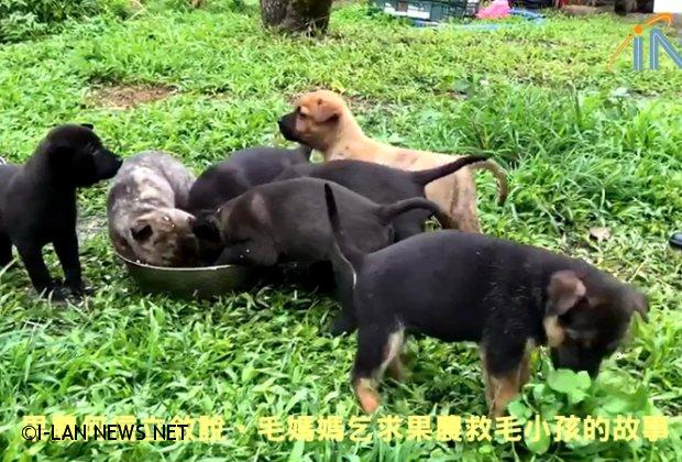 超溫馨!狗媽媽乞求果農救小狗狗的故事!