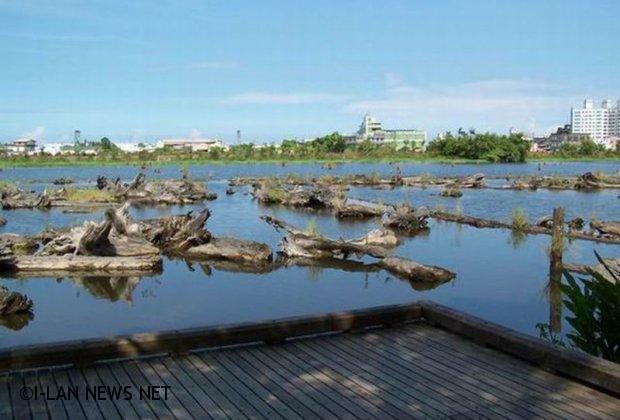 台灣林木製品有驗証條碼 民眾不怕買到來歷不明贓木