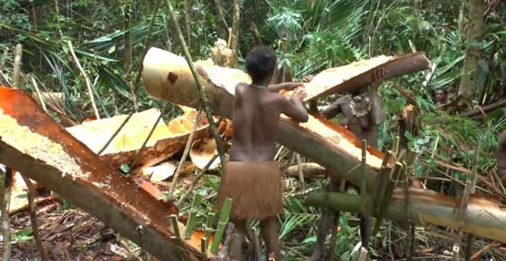 Suku pedalaman Papua bikin sagu