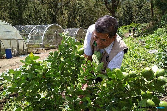 Dinilai Lebih Sehat Dan Menguntungkan Pertanian Organik Menjamur