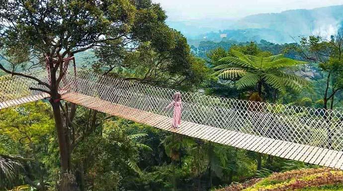 Jembatan gantung di Bukit Halimun Bogor