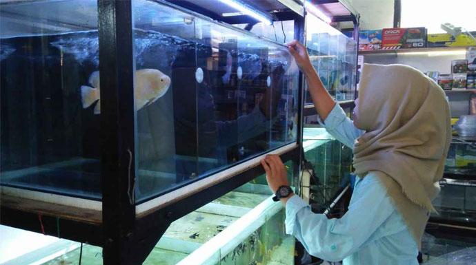 Bursa Ikan Laladon