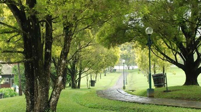 Ilustrasi-Hutan-Kota