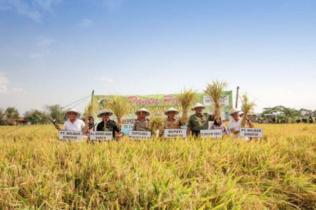 Direktur Wilmar Saronto Soebagyo (kiri) bersama jajaran Pemkab Madiun melakukan panen perdana padi dengan Pupuk Mahkotar di Kecamatan Sukolilo,Kabupaten Madiun Jawa Timur, Senin (4/11)