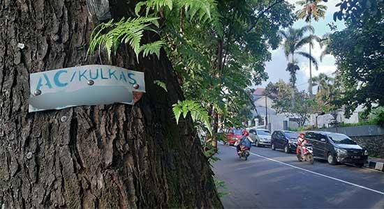 Paku Pohon di Sukabumi Didenda Rp50 Juta