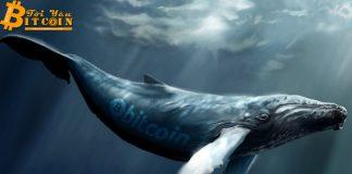 """Những chú """"cá voi"""" Bitcoin nổi tiếng trong thị trường crypto"""
