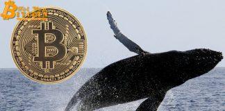 Cá voi Bitcoin thức giấc