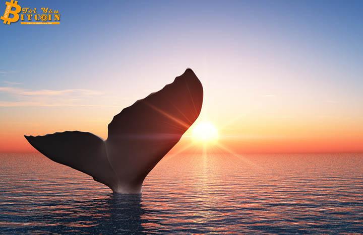 """Cá voi Bitcoin động nhẹ, gần 7.000 BTC """"out"""" khỏi thị trường"""