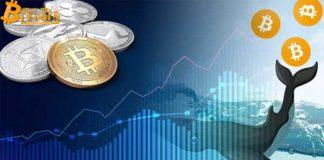 Cá voi Bitcoin xuất hiện, chuyển đi 148 triệu đô giá trị BTC chưa rõ nguyên do