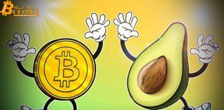 Nhà phân tích giải thích mối liên kết giữa giá Bitcoin và bơ