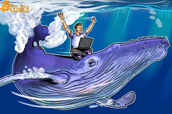 """""""Chỉ một"""" cá voi đứng sau đợt tăng giá lịch sử của Bitcoin vào năm 2017"""