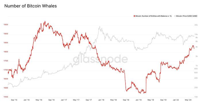 Số lượng cá voi Bitcoin tăng đáng kể kể từ tháng Ba. Nguồn: Glassnode
