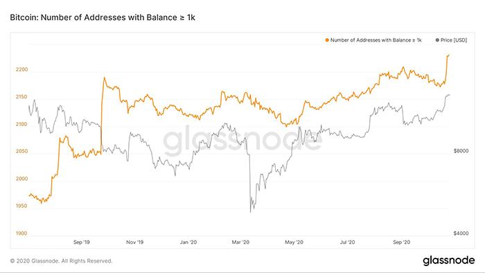 Số lượng cá voi Bitcoin hodl trên 1.000 BTC. Nguồn: Glassnode