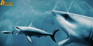 Bitcoin là 'trò cá mập lùa cá con'