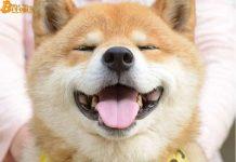 Giá Shiba Inu (SHIB) tăng hơn 400% sau khi niêm yết Binance