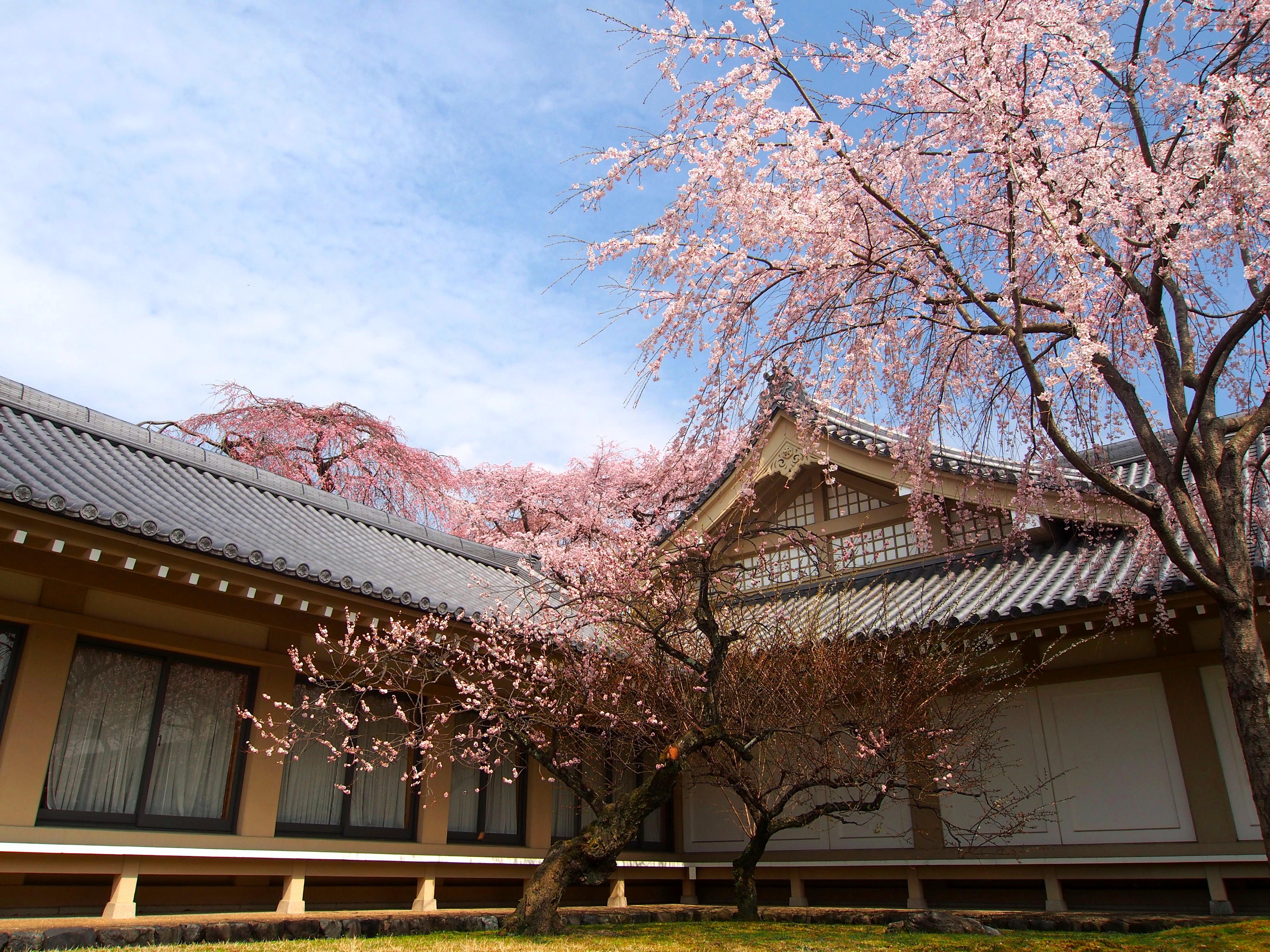 8 Tempat Wisata Jepang Saat Musim Semi Yang Wajib Dikunjungi