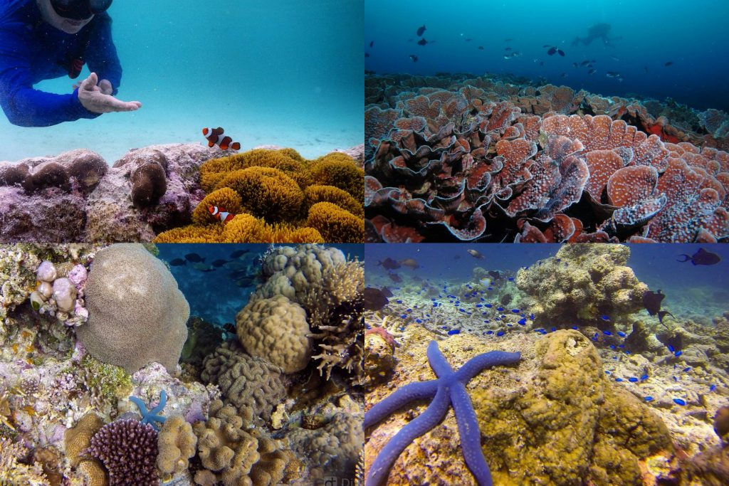 12 Destinasi Wisata Wakatobi Yang Luar Biasa Indahnya