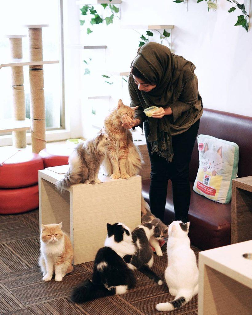 Unduh 43 Koleksi Wallpaper Lucu Cats HD Gratid