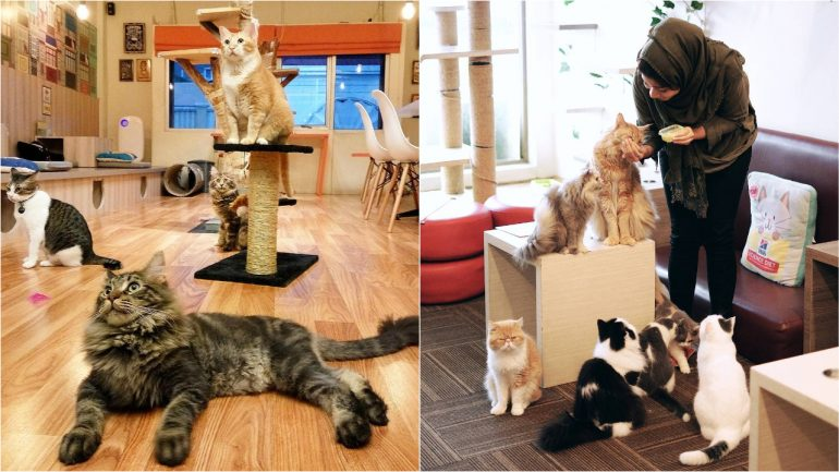 10 Kafe Kucing Di Indonesia Yang Lucu Imut Dan Menggemaskan