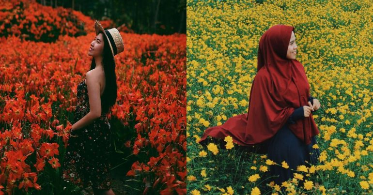 Download 60+ Wallpaper Bunga Yg Bisa Bergerak Foto Gratis Terbaru