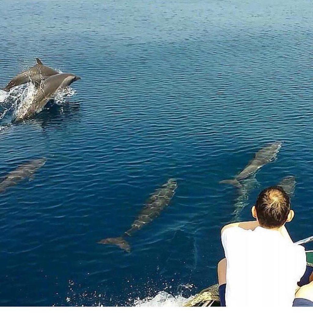 tempat melihat lumba-lumba,hiu,dan paus