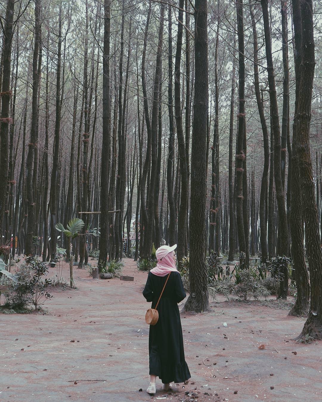8 Destinasi Wisata Hutan Pinus Untuk Liburan Anti-Mainstream