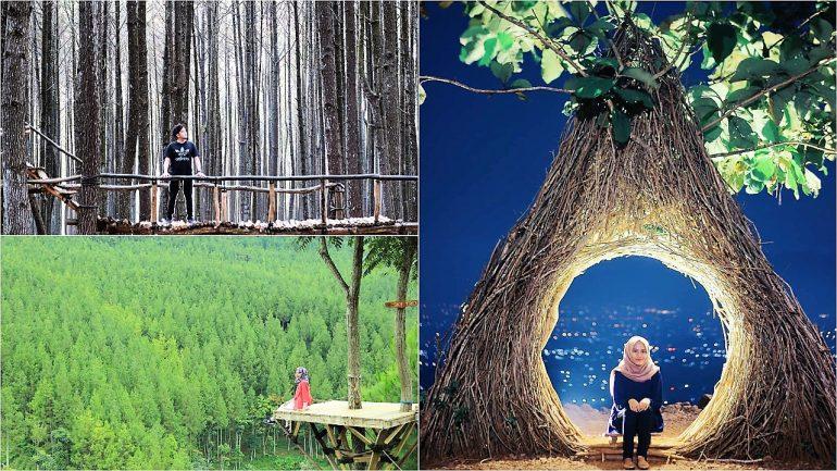 23 Destinasi Wisata Hutan Pinus Untuk Liburan Anti