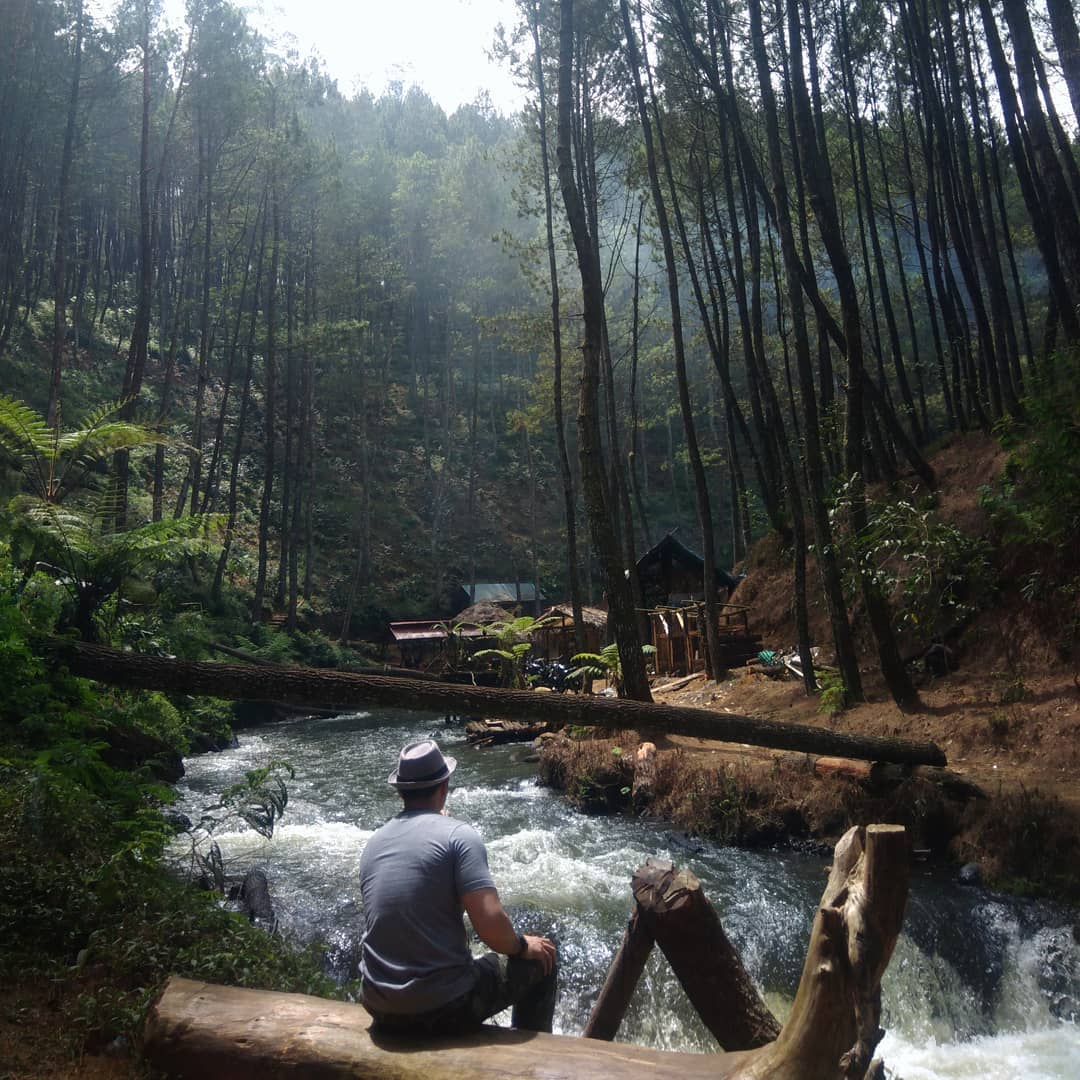 23 Destinasi Wisata Hutan Pinus Untuk Liburan Anti-Mainstream Dan Instagrammable