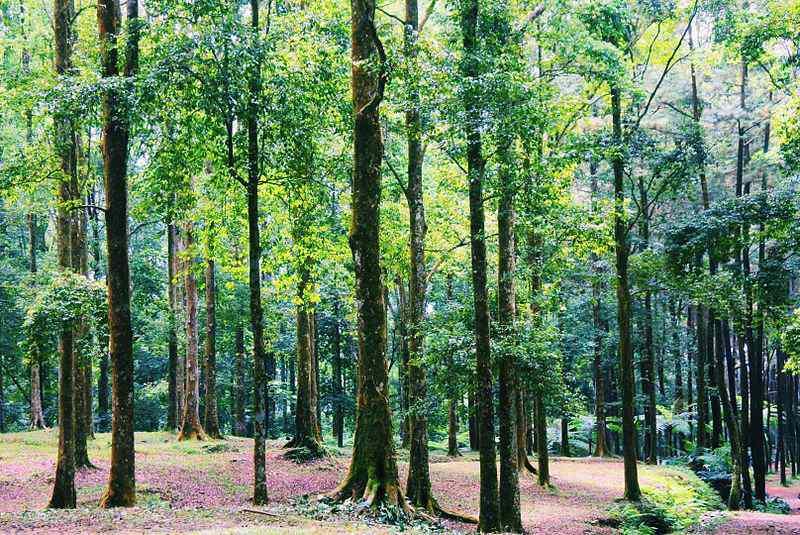 Taman Nasional di Jawa Barat