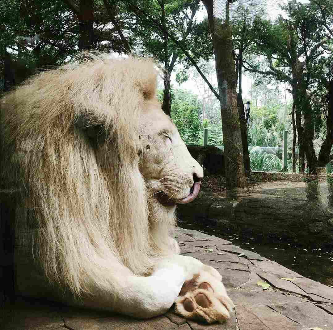 wisata binatang di jakarta
