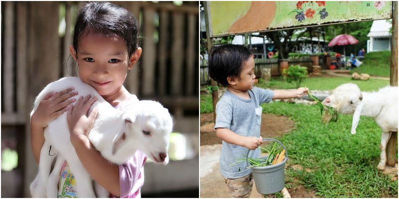 D'Kandang Amazing Farm   tempat wisata alam Depok