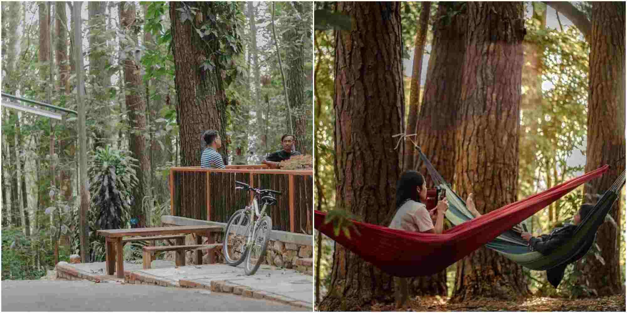 Dalemwangi Bed & Brew | cafe hutan bandung