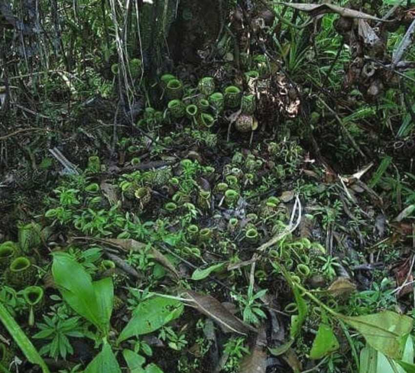 Wisata Ke Taman Nasional Siberut