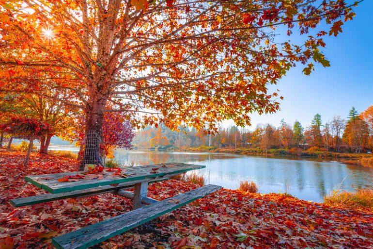 日本赏枫】秋天不容错过的大景点- TripZilla Malaysia