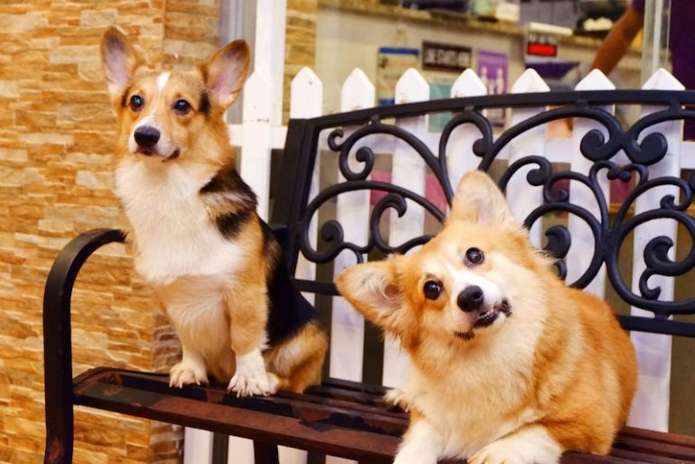 7 Most Adorable Pet Cafes In Manila Tripzilla Philippines