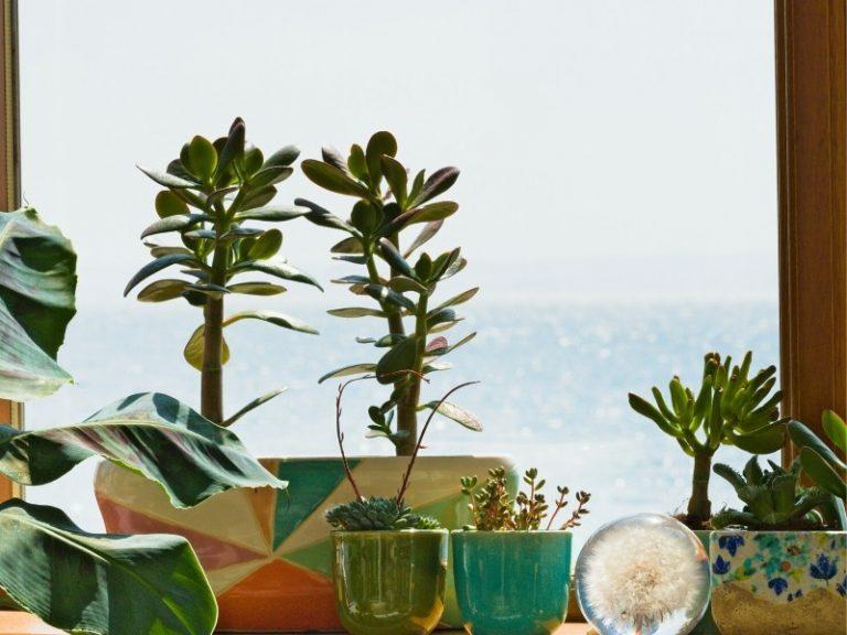 quarantine houseplant