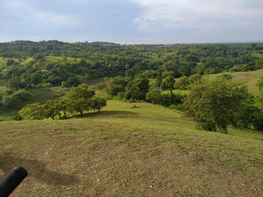 colosboa hills