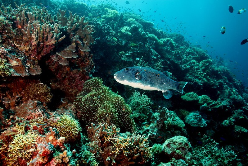 Spectacular Diving Sites in the Philippines