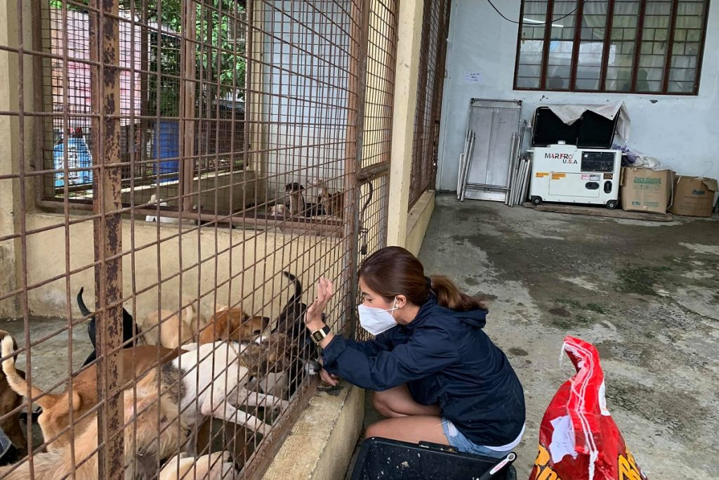 Pawssion Project Welcomes Adoptions for Dogs and Cats in Bulacan