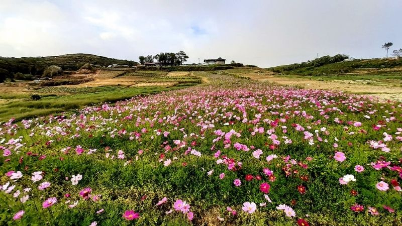 flower fields in the philippines