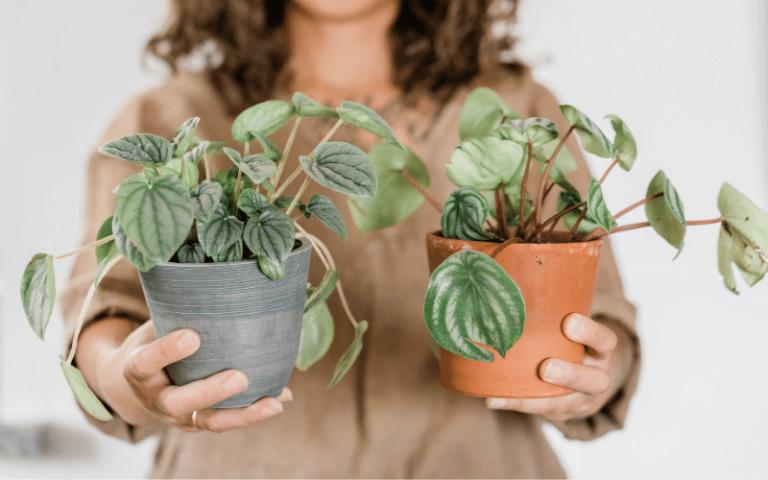 plants pandemic