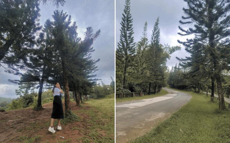 sapinit road