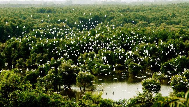 Vườn Quốc Gia Tràm Chim (Tỉnh Đồng Tháp)