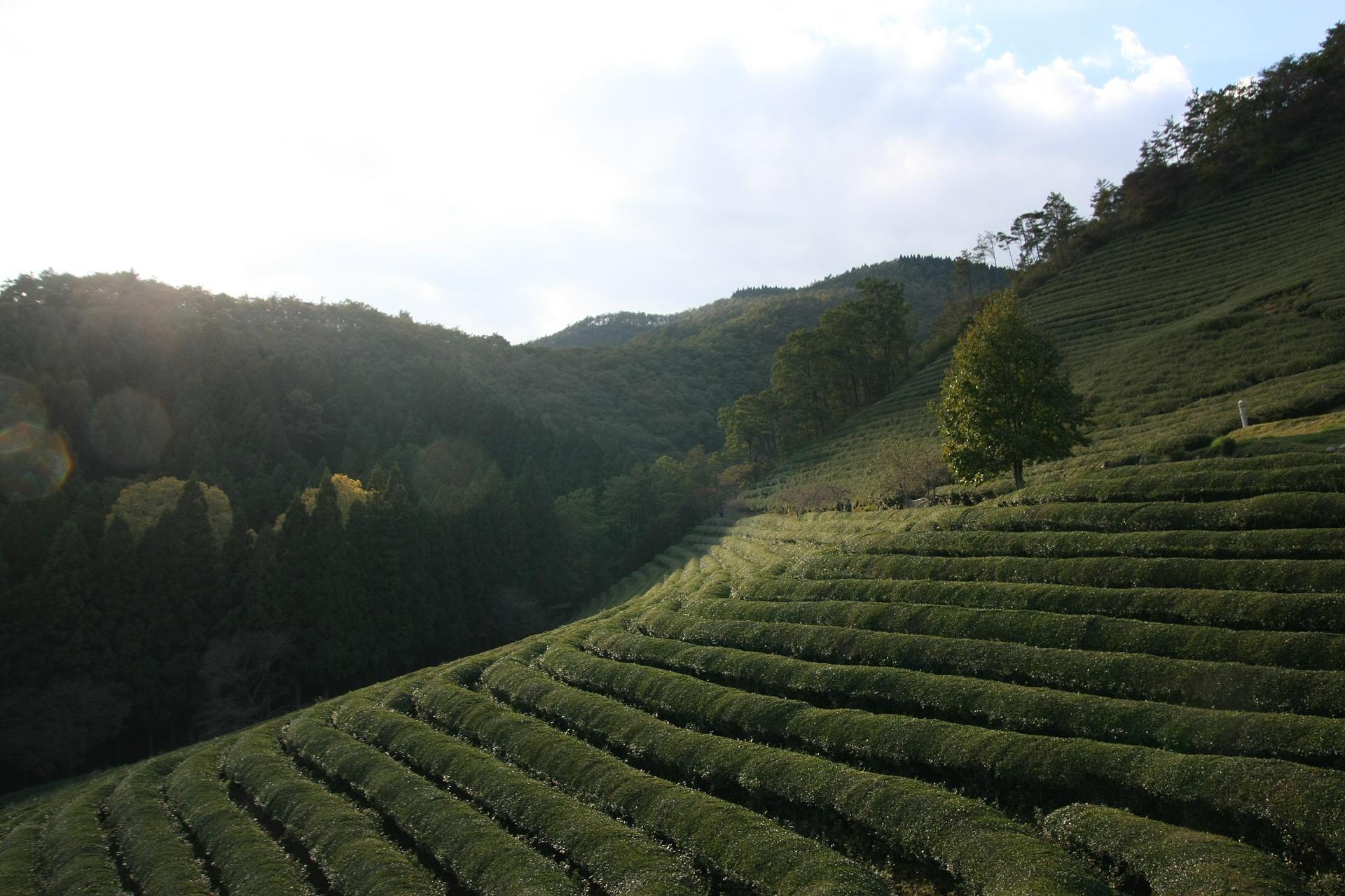 lịch trình du lịch Hàn Quốc Miền nam